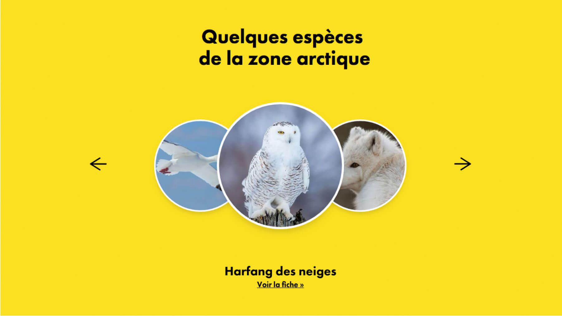 Agence Salto